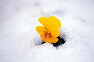 ♪春よ来い、春よ来い~・・・あれっ?